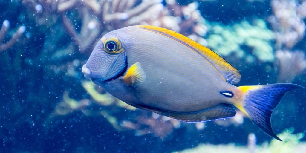 Ciri-ciri dan Klasifikasi Ikan