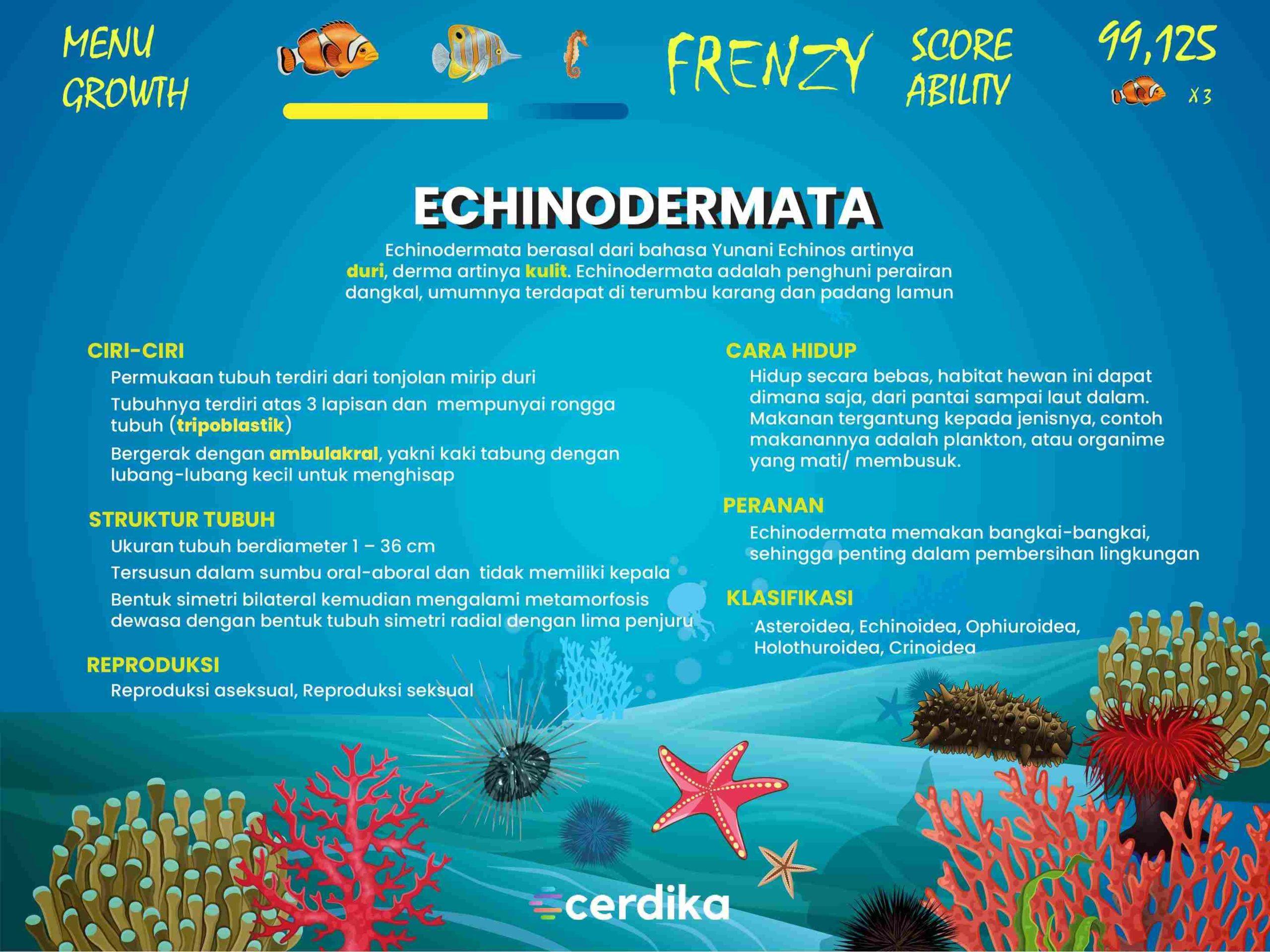 infografis Echinodermata