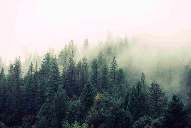 bidang sumber daya alam