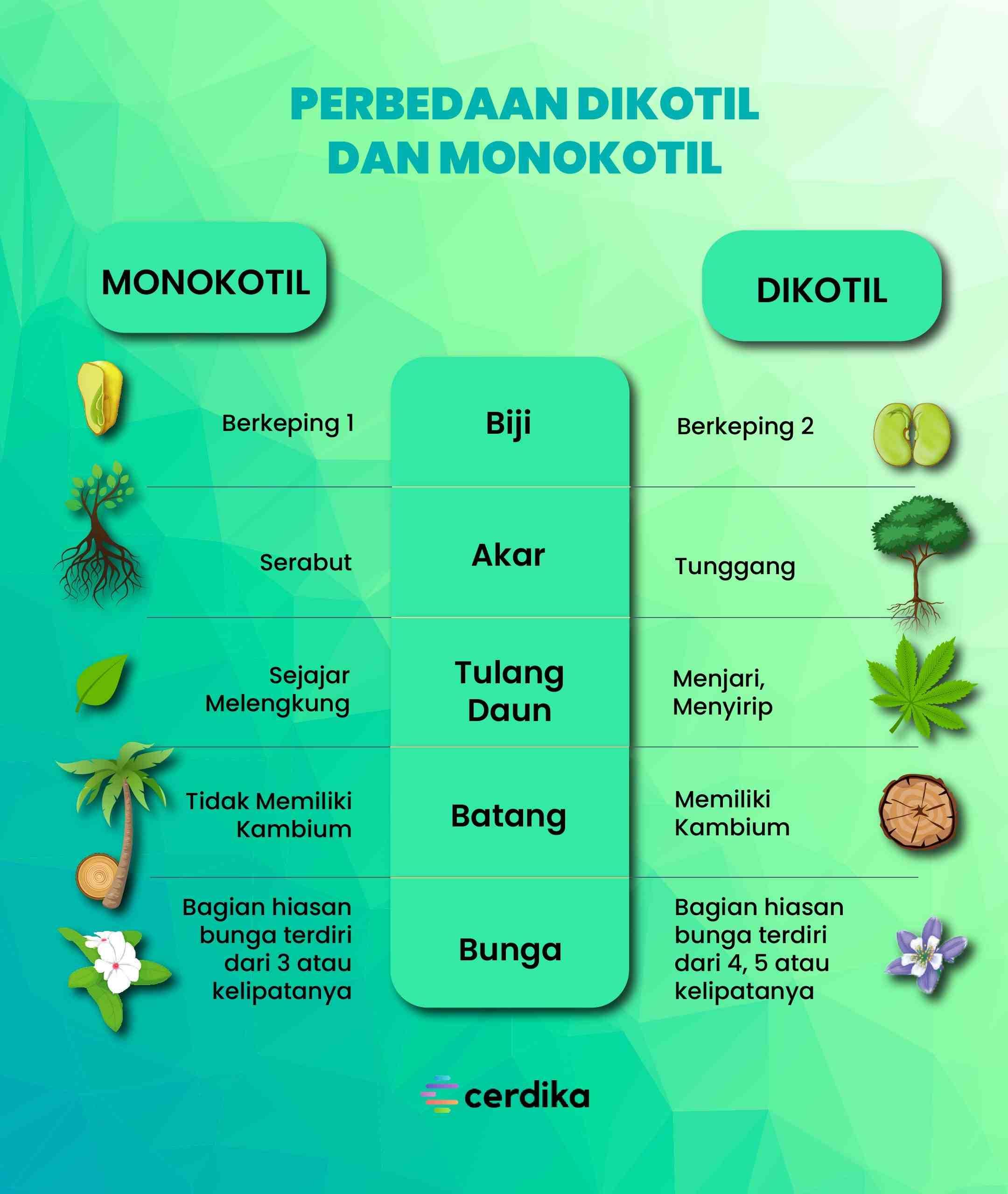 infografis perbedaan dikotil dan monokotil