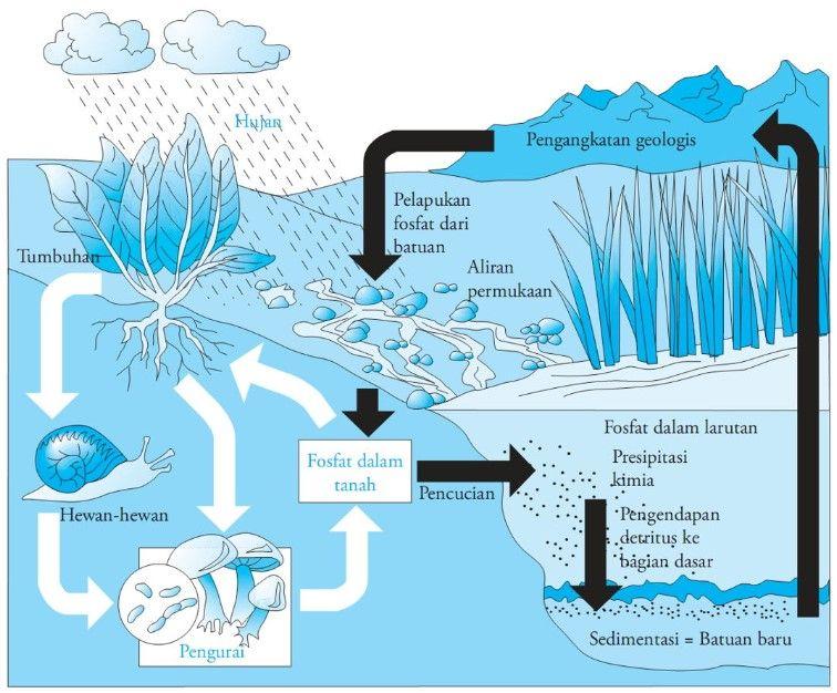 Pengertian Daur Fosfor