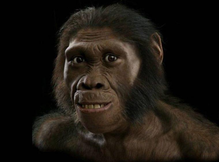 Apa Itu Meganthrupus Paleojavanicus