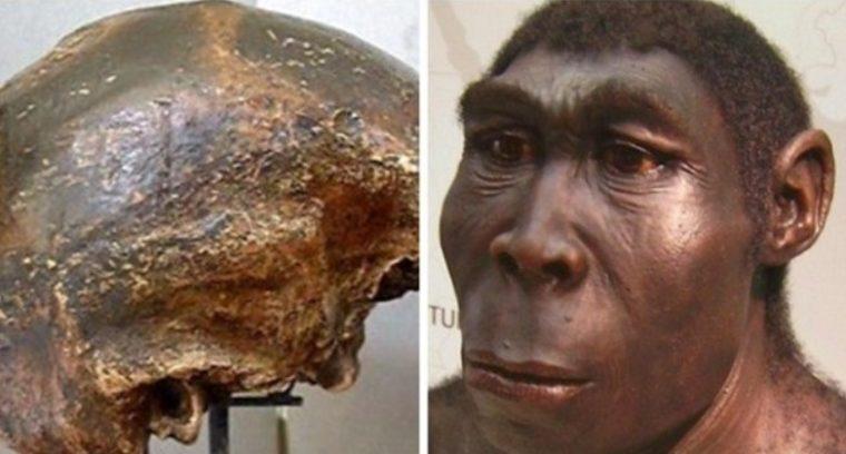 Ciri - Ciri Homo Soloensis