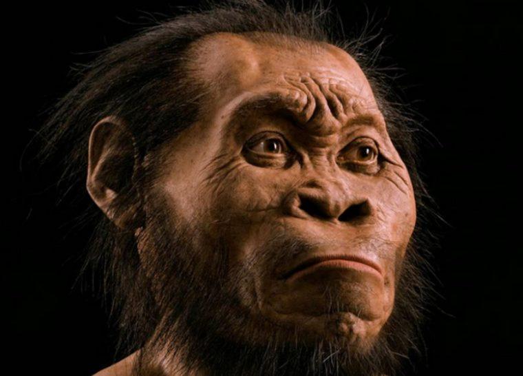 Ciri - Ciri Homo Wajakensis