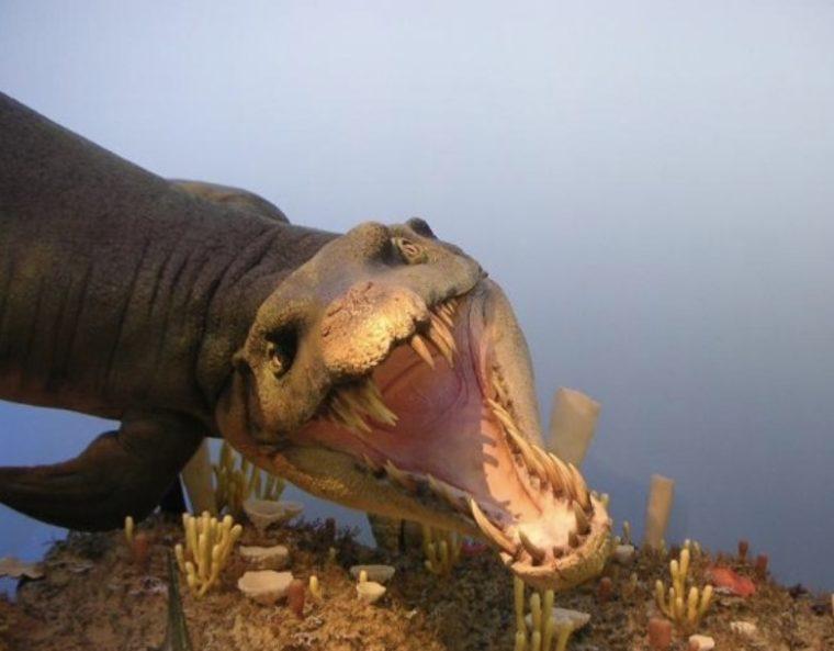Ciri - Ciri dari Zaman Paleozoikum