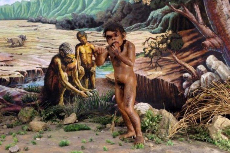 Food Gethering Pithecanthropus Erectus