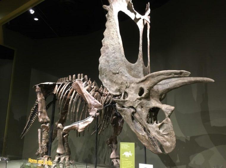 Hasil Peninggalan Zaman Mesozoikum