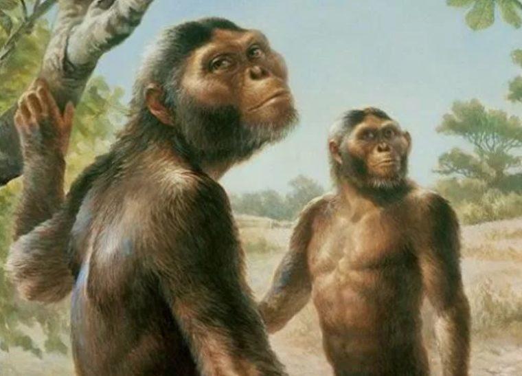 Jenis - Jenis Manusia Meganthropus Paleojavanicus