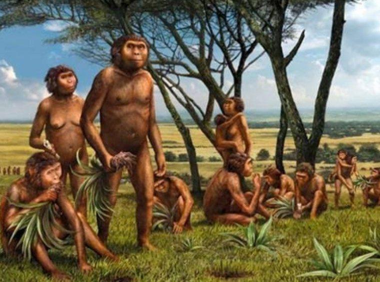 Pola Hidup Meganthropus Paleojavanicus