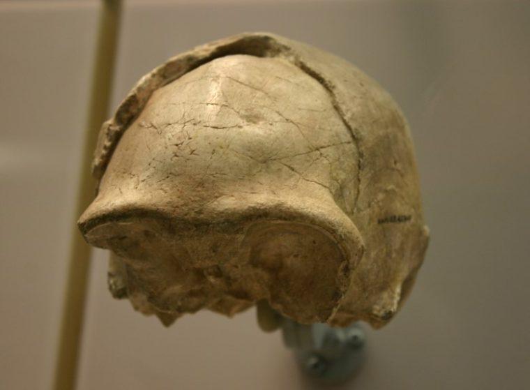 Sejarah Homo Soloensis