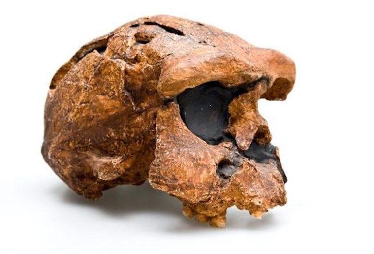 Sejarah Penemuan Homo Wajakensis