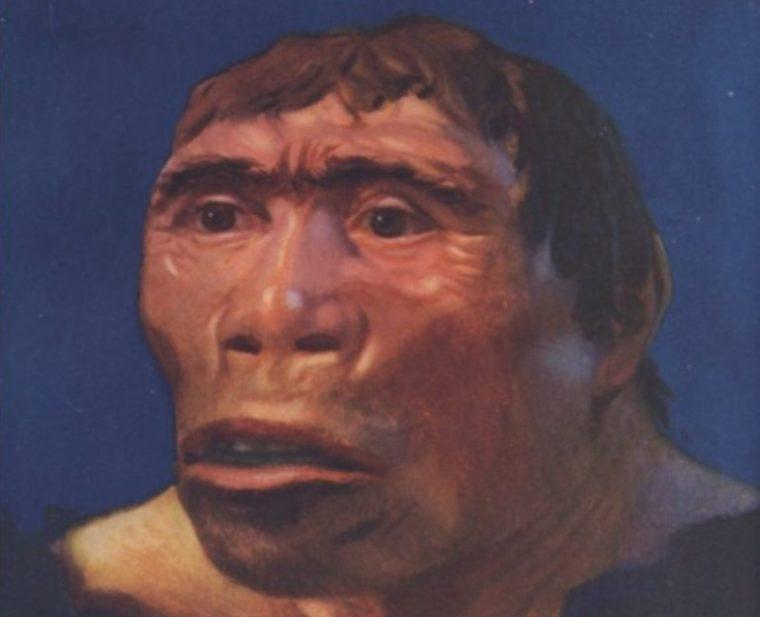 Sejarah Penemuan Pithecanthropus Erectus