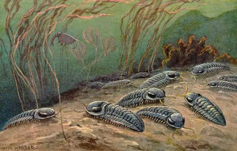 Sejarah Zaman Paleozoikum