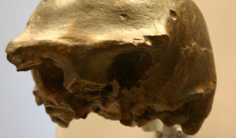 cover homo soloensis
