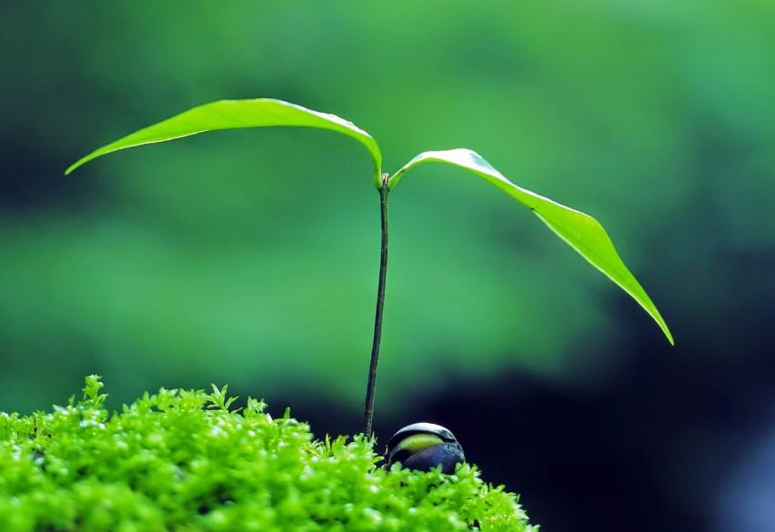 Gambar Thumbnail Perbedaan Pertumbuhan Primer dan Sekunder