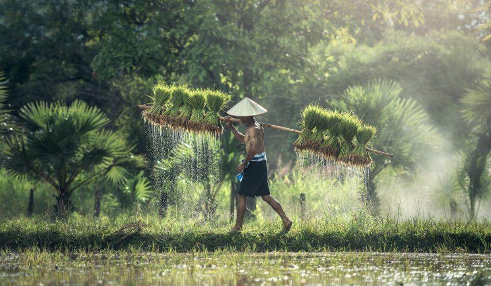 perbedaan negara maju dan berkembang Sumber Penghasilan