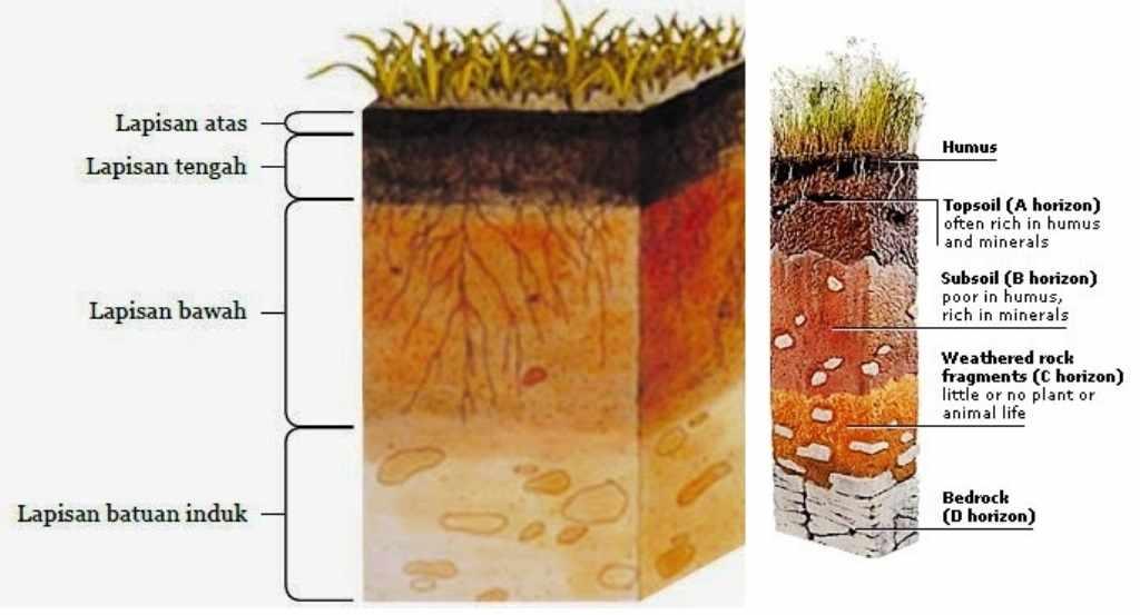 gambar profil tanah