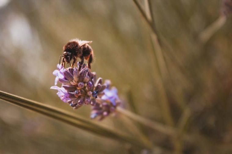Manfaat flora dan fauna