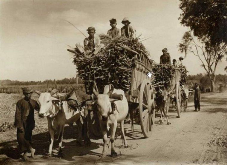 Transmigrasi (Perpindahan Penduduk)