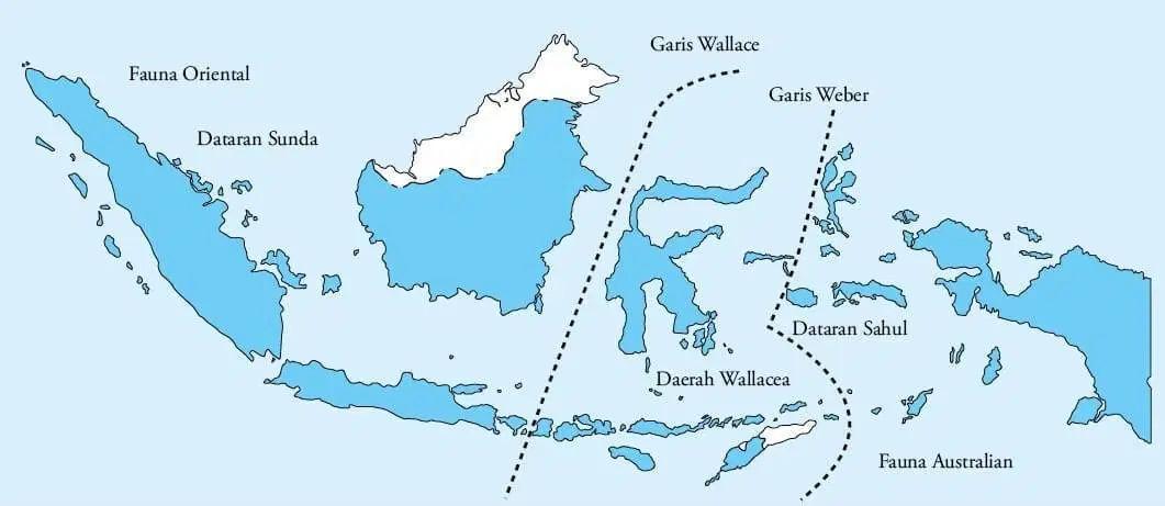 Penjelasan Lengkap Persebaran Flora Dan Fauna Di Indonesia