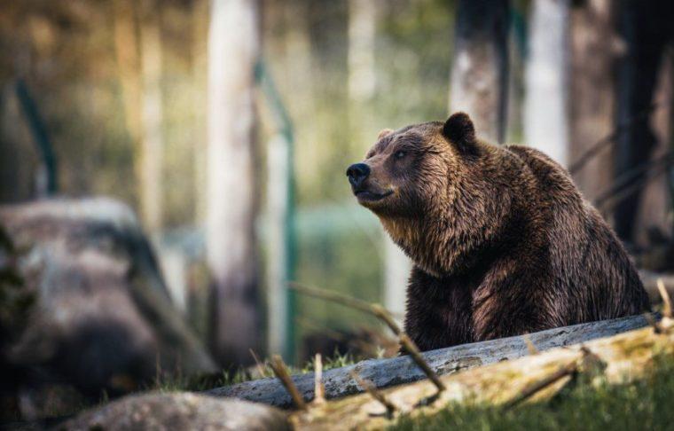 Contoh Teks Laporan Hasil Observasi Beruang Madu