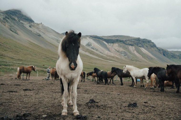 Contoh Teks Laporan Hasil Observasi Kuda