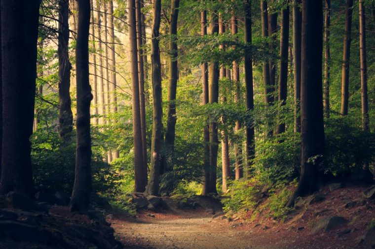 sumber daya hutan di indonesia