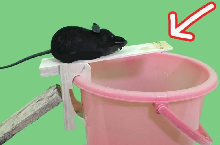 Contoh Membuat Jebakan Tikus