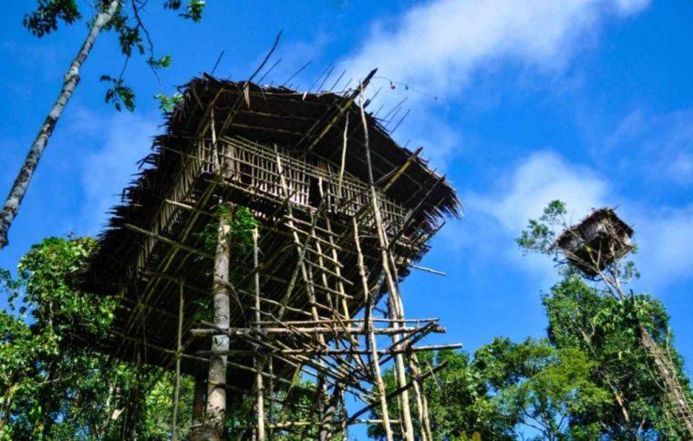 Rumah Adat Papua Rumah Pohon