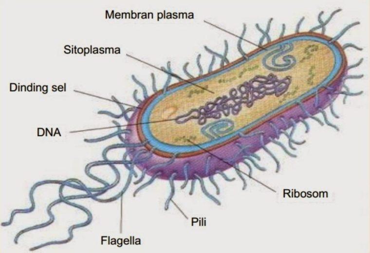Ciri-Ciri Archabacteria