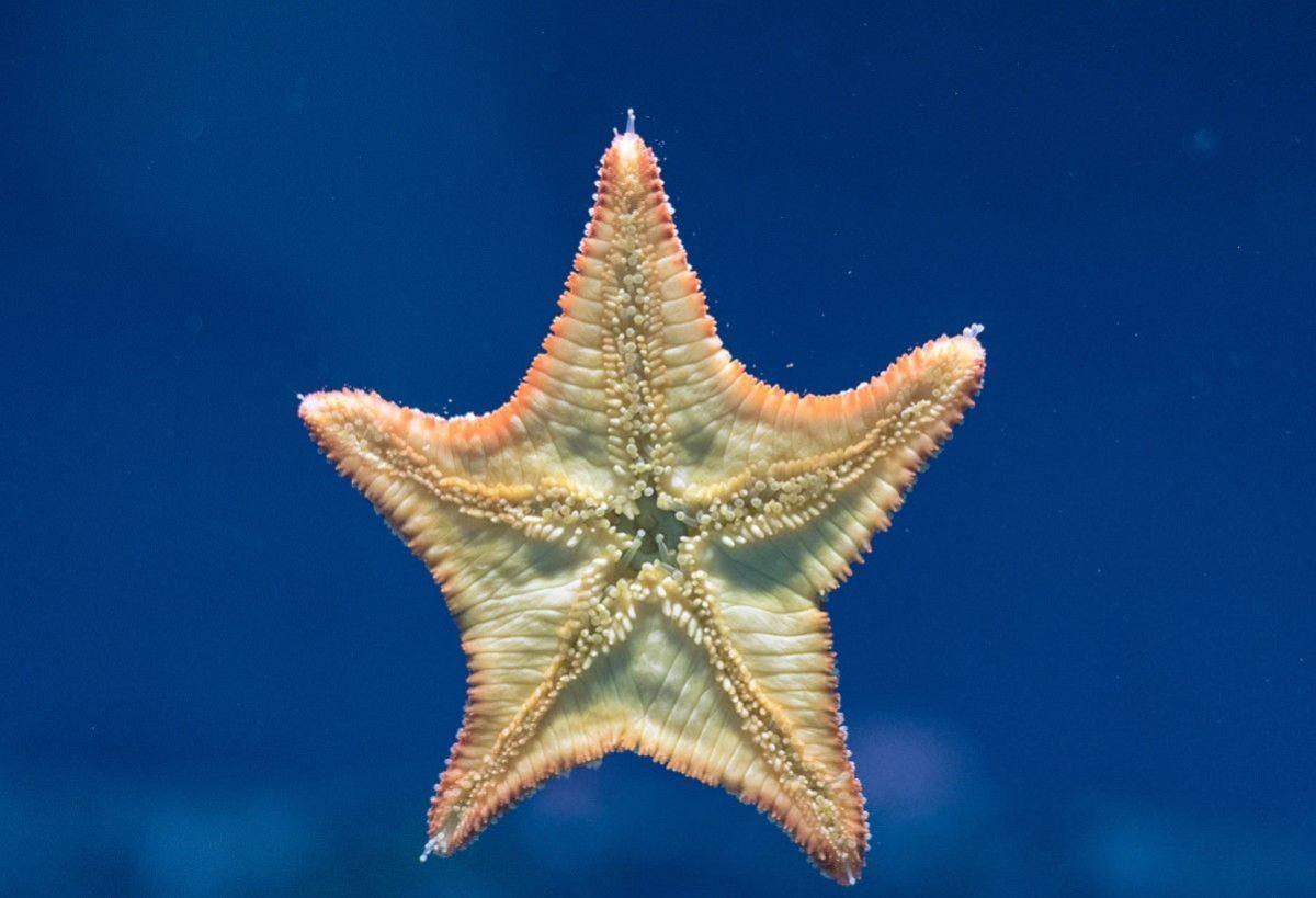 Gambar Thumbnail Invertebrata