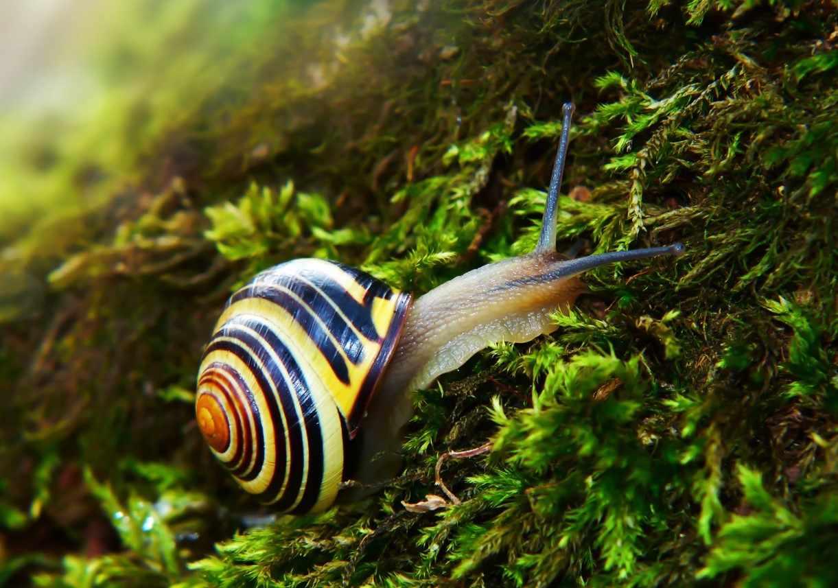 Gambar Thumbnail Mollusca