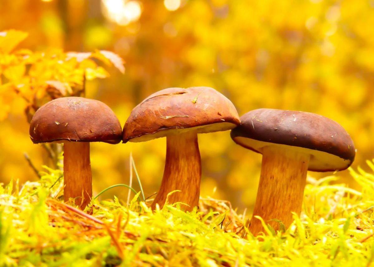 Gambar Thumbnail Pengertian Jamur