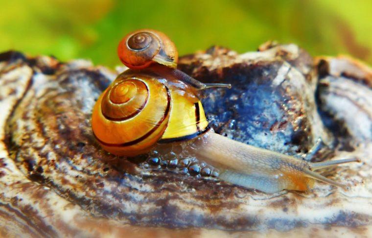 Klasifikasi Mollusca