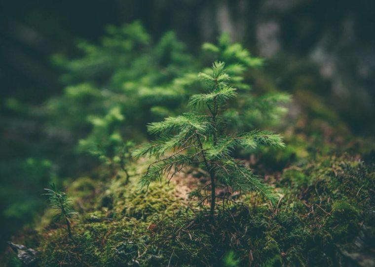 Klasifikasi Tumbuhan Berbiji