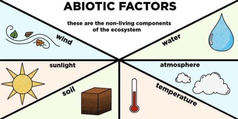 Komponen Abiotik