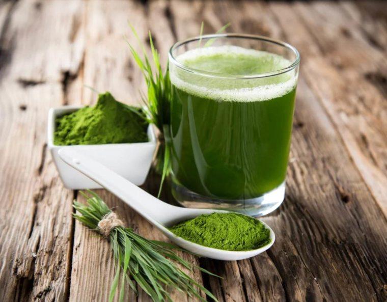 Manfaat Cyanobacteria