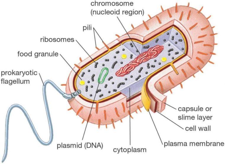 Pengertian Archabacteria