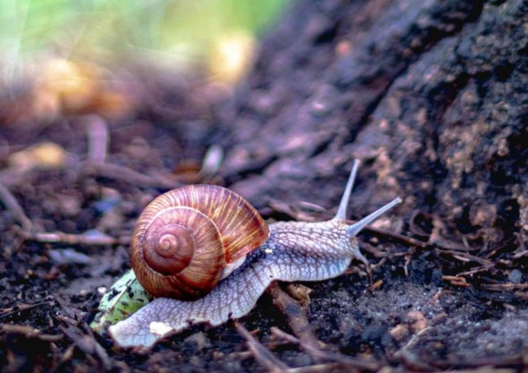 Pengertian Mollusca