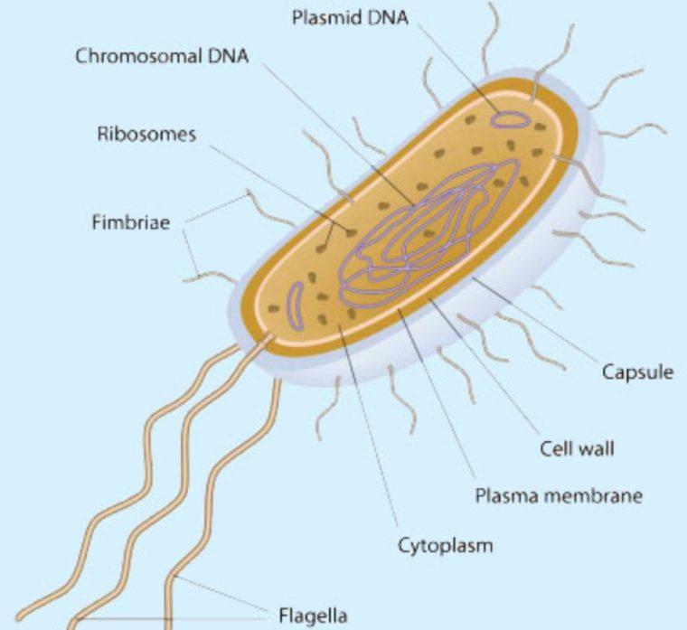 Peran Archabacteria pada Kehidupan