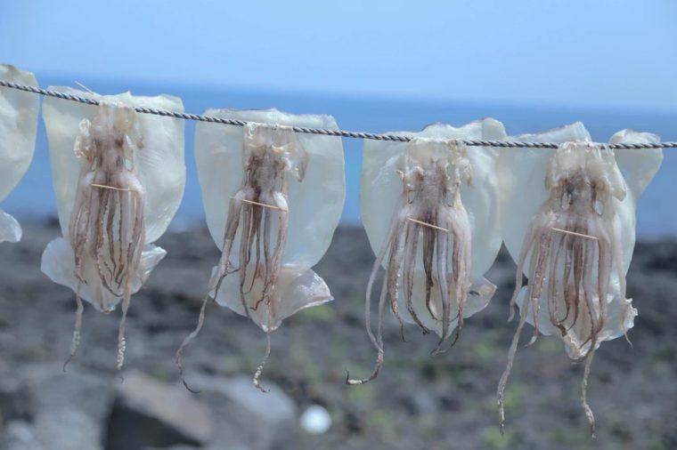 Peran Mollusca Bagi Kehidupan Manusia