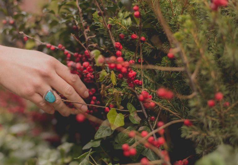 Peran dan Pemanfaatan Tumbuhan Berbiji