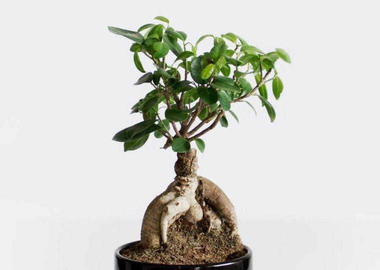 Struktur Tubuh Tumbuhan Berbiji