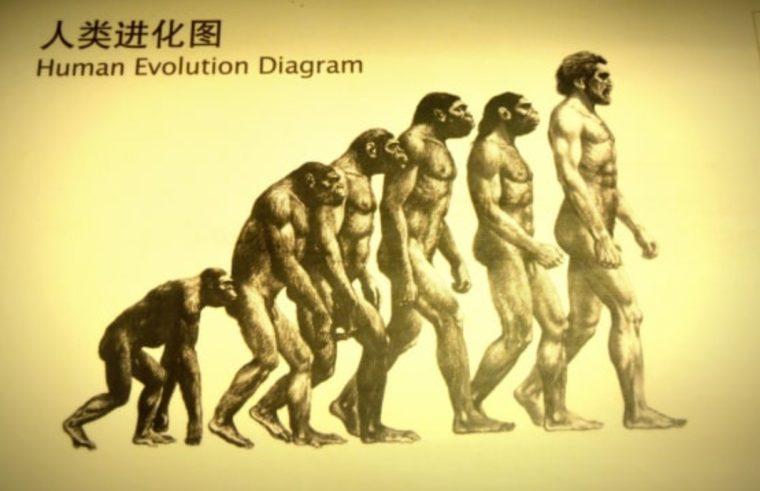 Ciri-Ciri Evolusi