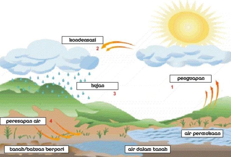 Contoh Daur Biogeokimia