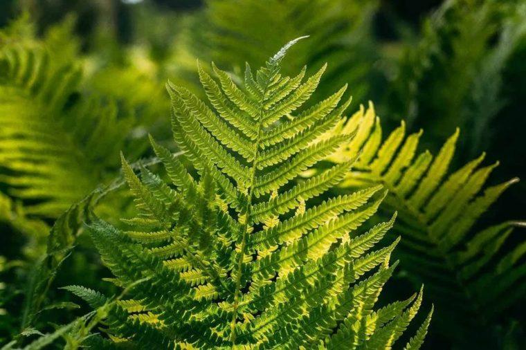 Faktor yang Mempengaruhi Pertumbuhan Tumbuhan Paku
