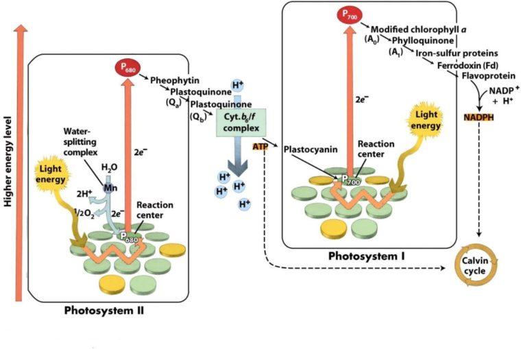 Fungsi Anabolisme