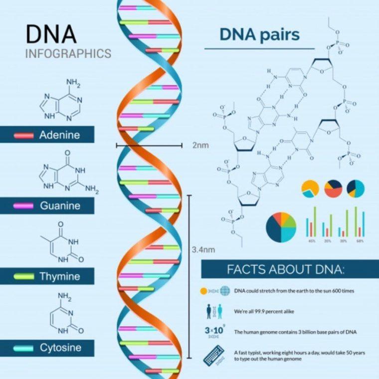 Fungsi dan Sifat DNA