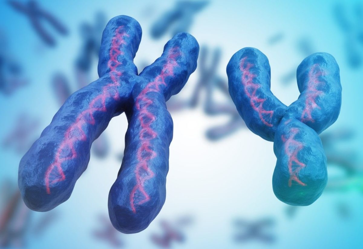 Gambar Thumbnail Kromosom