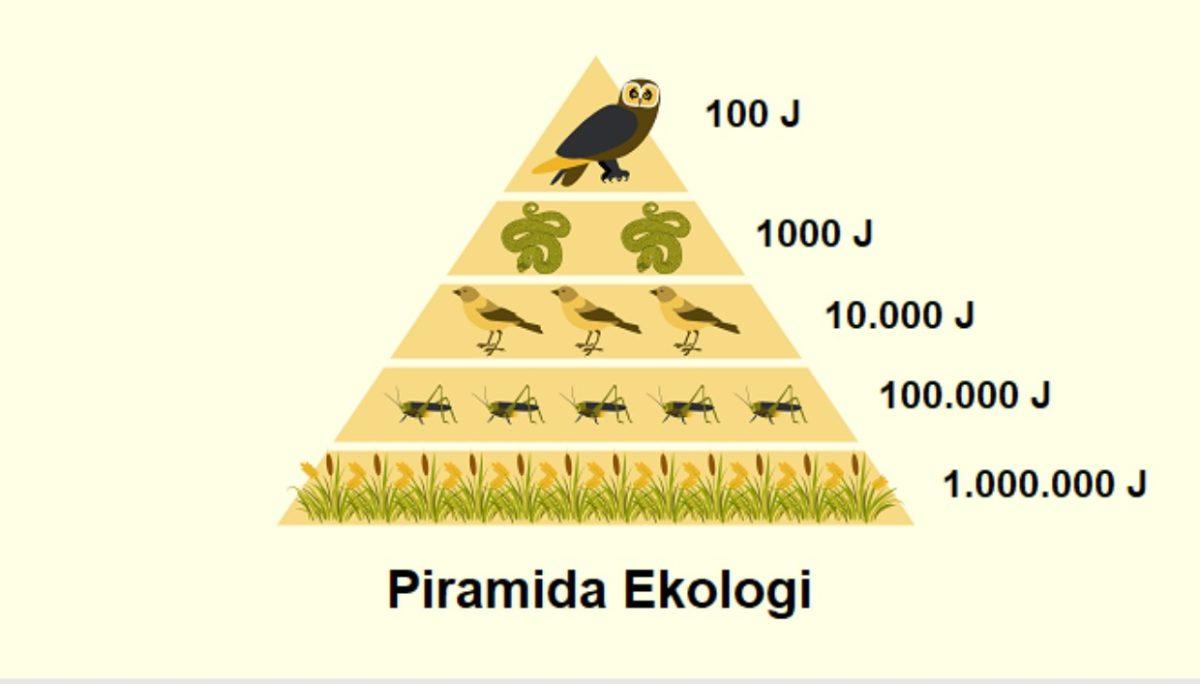 Gambar Thumbnail Piramida Ekologi